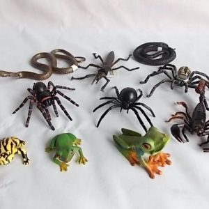 aussie arachnids snakes frogs stick insect