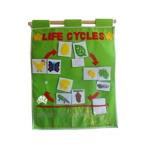 three life cycles wall chart