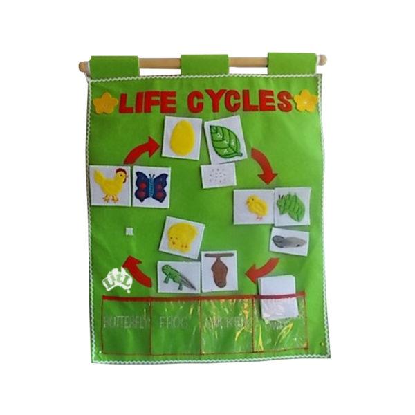 three life cycles wall chart